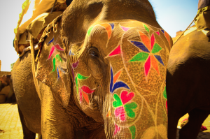 Painted elephant on a Thailand honeymoon
