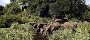 elephants drinking at Singita Lebombo