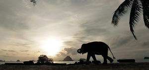 Koko the elephant at Phulay Bay