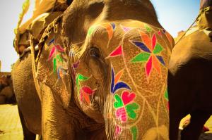 Painted elephant on a Thailand honeymoon